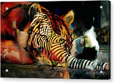 Original Olivia Wild And The Tiger Painting Acrylic Print by Marvin Blaine