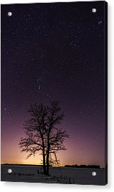 Orion Tree Acrylic Print