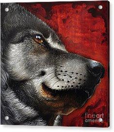 Orion Wolf Acrylic Print by Jurek Zamoyski