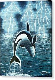Orka     Killer Whale Acrylic Print