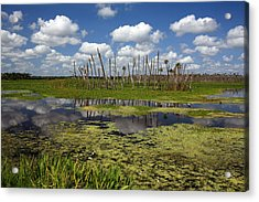 Orlando Wetlands Cloudscape 2 Acrylic Print by Mike Reid