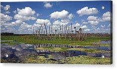 Orlando Wetlands Cloudscape Acrylic Print by Mike Reid