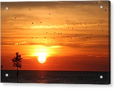 Orleans Sunset Acrylic Print by Jim Gillen