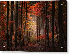 Orton Forest Acrylic Print by Philippe Sainte-Laudy