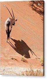 Oryx (oryx Gazella Acrylic Print by Jaynes Gallery