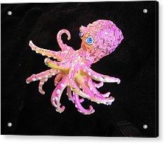 Oscar The Octopus Acrylic Print by Dan Townsend