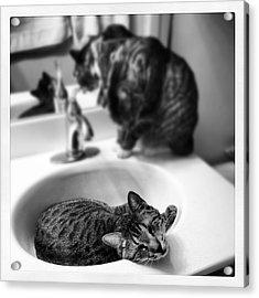 Oskar And Klaus At The Sink Acrylic Print by Mick Szydlowski