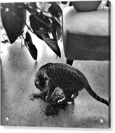 Oskar In Trouble Acrylic Print by Mick Szydlowski
