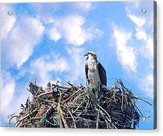 Acrylic Print featuring the photograph Osprey On Nest by David Rich
