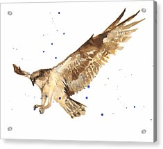 Osprey Painting Acrylic Print by Alison Fennell