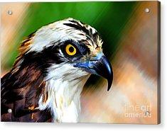Osprey Portrait Acrylic Print by Dan Friend