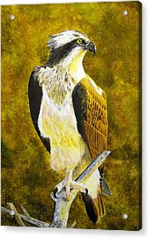 Acrylic Print featuring the painting Osprey Profile by Stan Tenney