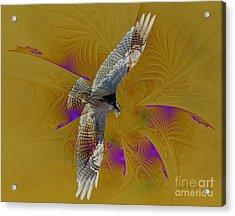 Osprey Wild Acrylic Print by Deborah Benoit