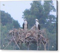 Osprey's Chatting On The Chesapeake Bay Acrylic Print by Debbie Nester