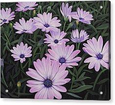 Osteospermums Acrylic Print
