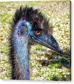 Acrylic Print featuring the photograph Ostrich 1 by Dawn Eshelman