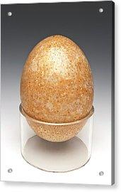 Ostrich Egg Acrylic Print