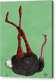 Ostrich With Stripey Legs Acrylic Print by Kelly McLaughlan