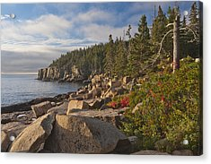 Acrylic Print featuring the photograph Otter Cliff Morning by Rick Hartigan
