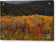 Otter Creek Road Acrylic Print by Paul Noble