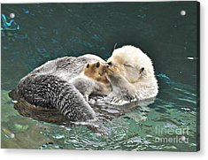 Otter Dreams Acrylic Print by Mindy Bench