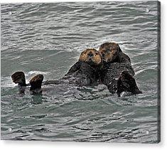 Otter Love Acrylic Print by David Marr