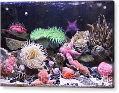 Our Colourful Underwater World Acrylic Print