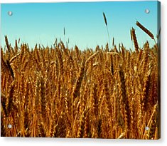 Our Daily Bread Acrylic Print by Karen Wiles