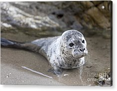 Out For A Swim Acrylic Print by David Millenheft