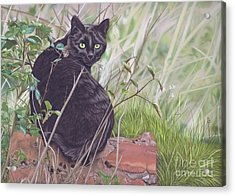 Out Hunting Acrylic Print