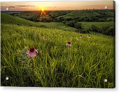 Out In The Flint Hills Acrylic Print by Scott Bean