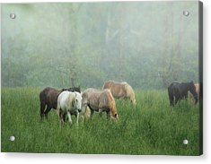 Out In The Rain Acrylic Print