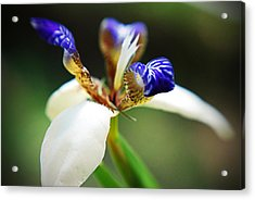 Out My Back Door Acrylic Print