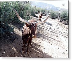 Out Of Africa  Long Horns Acrylic Print