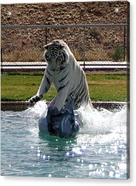 Out Of Africa Tiger Splash 1 Acrylic Print