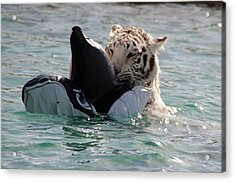 Out Of Africa Tiger Splash 4 Acrylic Print
