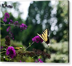 Acrylic Print featuring the photograph Out Of Bounds 3 by Judy Wolinsky