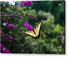 Acrylic Print featuring the photograph Out Of Bounds by Judy Wolinsky