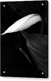 Out Of The Darkness Acrylic Print by Tara Miller