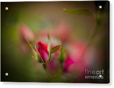 Out Of The Mist Acrylic Print by Mike Reid