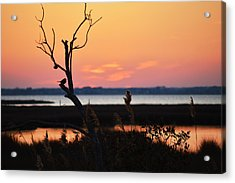 Acrylic Print featuring the photograph Ocean City Sunset Out On A Limb by Bill Swartwout