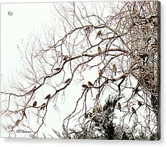Acrylic Print featuring the photograph Out On A Limb First Snow by Barbara Chichester