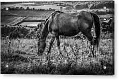 Out To Grass Acrylic Print by Ian Hufton