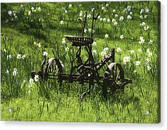 Out To Pasture 2 Acrylic Print