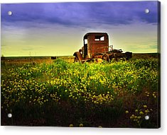 Acrylic Print featuring the photograph Out To Pasture by Sonya Lang