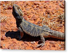 Acrylic Print featuring the photograph Outback Lizard by Henry Kowalski