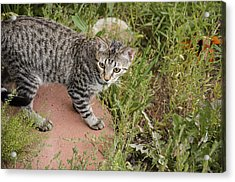 Outdoor Playtime Acrylic Print by Mike Schmidt