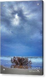Outer Banks - Driftwood Bush On Beach In Surf I Acrylic Print by Dan Carmichael