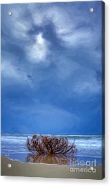 Outer Banks - Driftwood Bush On Beach In Surf II Acrylic Print by Dan Carmichael