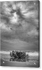 Outer Banks - Driftwood Bush On Beach In Surf IIi Acrylic Print by Dan Carmichael